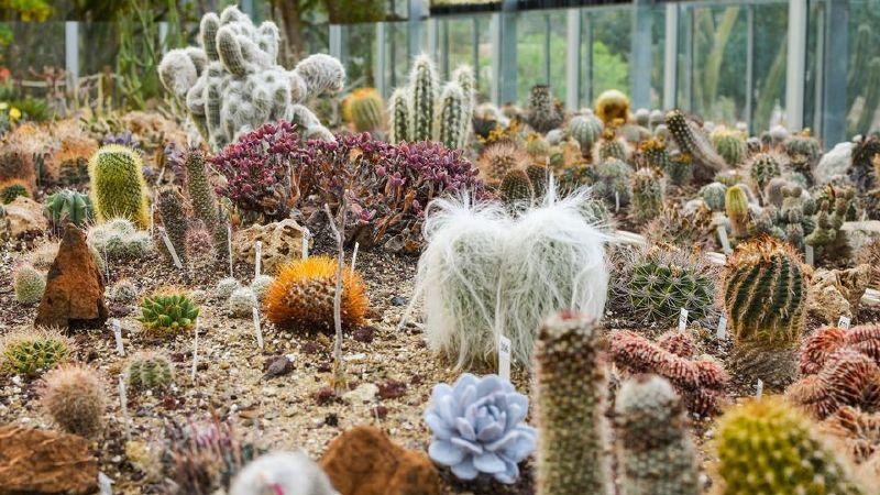 Jardín Botánico de Cactus y Suculentas