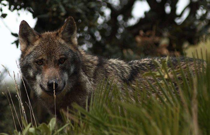 Lobo park, fauna y naturaleza