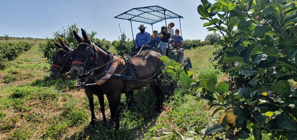 Paseo en carro de mulas