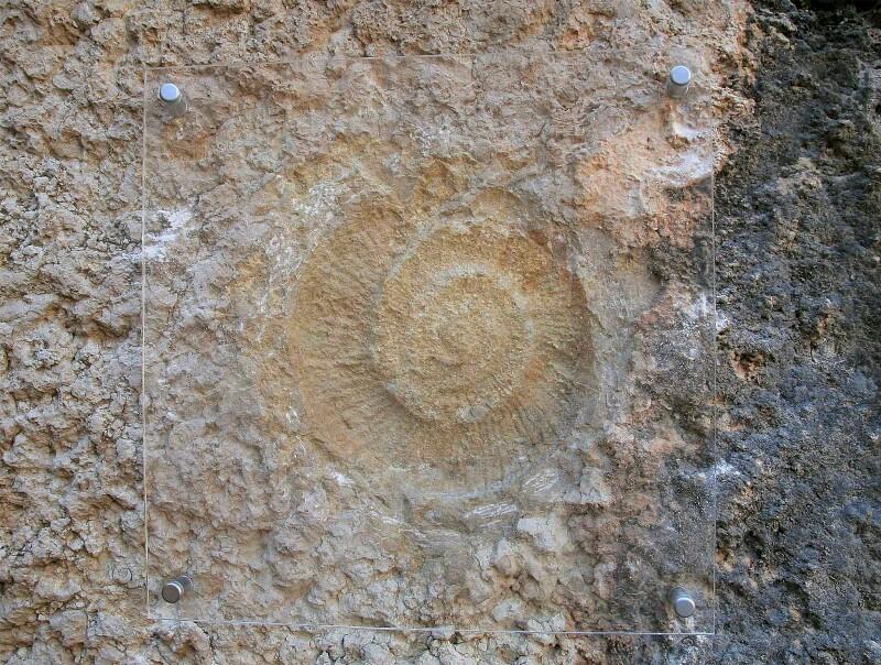 Fósil de ammonites caminito del Rey